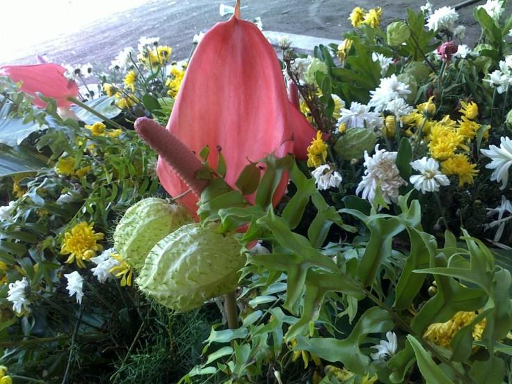 bunga aneh